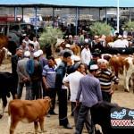 7427ea12154a13e14d5f01-150x150 Kaşgar vilayetinde bir polis karakolunda çıkan olayda 11 kişinin öldüğü bildirildi.