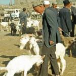 38414_416157114245_6007788_n-150x150 Uygur kültür ve sosyal yaşam