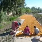 38781_418581474245_3975591_n-150x150 Uygur kültür ve sosyal yaşam