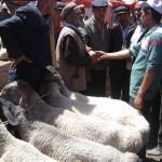 40997_431577224245_6700989_n-150x150 Uygur kültür ve sosyal yaşam