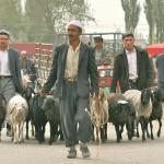 60974_438025164245_927721_n-150x150 Uygur kültür ve sosyal yaşam