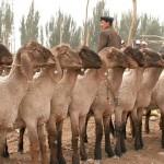 61141_438650834245_2853854_n-150x150 Uygur kültür ve sosyal yaşam