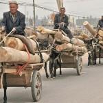63218_434133609245_7183687_n-150x150 Uygur kültür ve sosyal yaşam