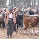 69449_450077074245_2762114_n-150x150 Uygur kültür ve sosyal yaşam
