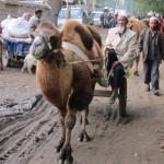 71903_444980649245_4736192_n-150x150 Uygur kültür ve sosyal yaşam