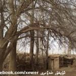 1781916_684351518273874_1059379848_n-150x150 Doğu Türkistandaki Depremzedeler için acil yardım çağrısı