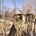 1922521_627989507268977_1078085608_n-150x150 Doğu Türkistandaki Depremzedeler için acil yardım çağrısı