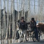 1496769_10152553047493942_1124973493_n-150x150 Doğu Türkistan Uygur Türkleri Şubat 2014