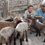 1503856_205767632960191_128009910_n-150x150 Doğu Türkistan Uygur Türkleri Şubat 2014