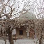 1531893_10152549819623942_838681076_n-150x150 Doğu Türkistan Uygur Türkleri Şubat 2014
