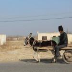 1545758_10152553046793942_1654041869_n-150x150 Doğu Türkistan Uygur Türkleri Şubat 2014