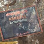 1545903_10152562739063942_1648138448_n-150x150 Doğu Türkistan Uygur Türkleri Şubat 2014