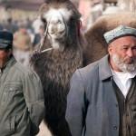 1622663_205768116293476_202107607_n-150x150 Doğu Türkistan Uygur Türkleri Şubat 2014